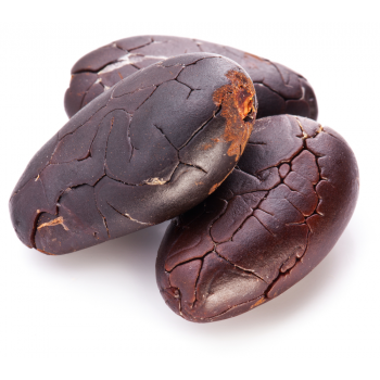 cacao roasted beans