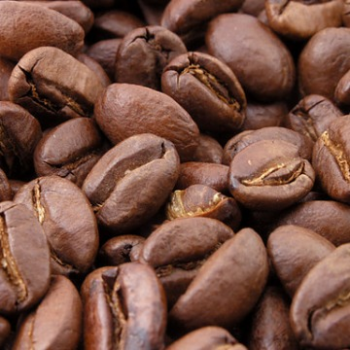 Coffee Arabica Caturra